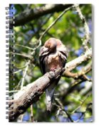 Img_7276 - Mourning  Dove Spiral Notebook