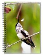 Img_7436-020 - Ruby-throated Hummingbird Spiral Notebook