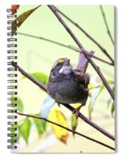 Img_7541-002 - White-throated Sparrow Spiral Notebook