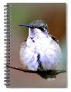 Img_8835 - Ruby-throated Hummingbird Spiral Notebook