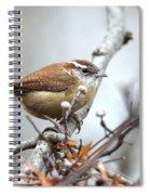 Img_9256 - Carolina Wren Spiral Notebook