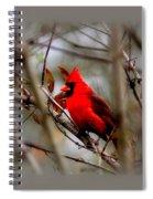 Img_9241 - Northern Cardinal Spiral Notebook
