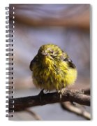 Img_9853 - Pine Warbler -  Very Wet Spiral Notebook