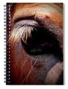Img_9984 - Horse Spiral Notebook