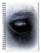 Img_9999 - Horse Spiral Notebook