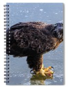 Immature Eagle Having Lunch Spiral Notebook