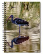 Immature White Ibis At Sunrise Spiral Notebook