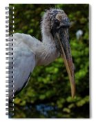 Immature Wood Stork Spiral Notebook