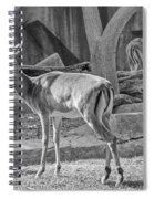 Impala    Black And White Spiral Notebook