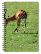 Impala Buck Spiral Notebook