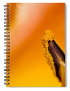 In A Daylily Spiral Notebook