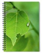 In A  Green World  Spiral Notebook