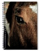 In A Horse's Eye Spiral Notebook