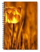 In A Perfect World Spiral Notebook