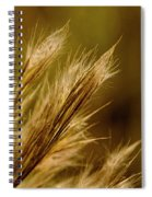 In An Autumn Field - Golden Macro Spiral Notebook
