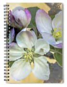 In Apple Blossom Time Spiral Notebook