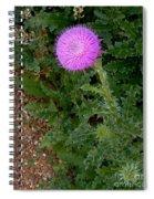 In Demure Profile Spiral Notebook