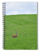 In Fields Of Green Spiral Notebook