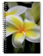 In Love With Butterflies Plumeria Flower Cecil B Day Butterfly Center Art Spiral Notebook