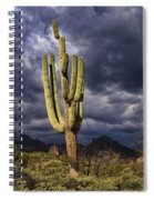In Search Of That Perfect Saguaro  Spiral Notebook