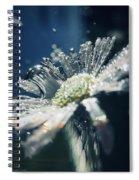 In The Big Blue Spiral Notebook
