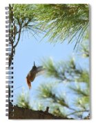In The Big Tree Spiral Notebook