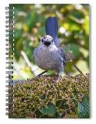In The Catbird Seat Spiral Notebook