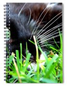 In The Grass Spiral Notebook