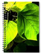 In The Limelight Spiral Notebook
