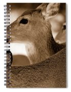 In The Middle Spiral Notebook