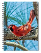 In The Pines Spiral Notebook