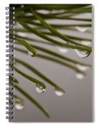 In The Rain Spiral Notebook