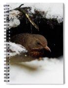 In The Shelder. Eurasian Blackbird Spiral Notebook