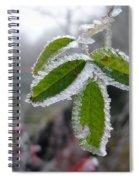 In The Winter Sunlight Spiral Notebook
