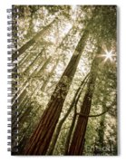 In The Woods 3 Spiral Notebook