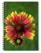 Indian Blanket Flower - Gaillardia Spiral Notebook