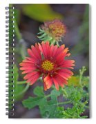 Indian Blanket Flower Spiral Notebook