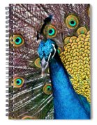 Indian Blue Peacock Spiral Notebook