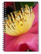 Indian Hawthorn 3 Spiral Notebook