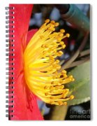 Indian Hawthorn Profile Spiral Notebook