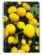 Indian Mums - Yellow Chaamanthi Spiral Notebook