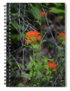 Indian Paint Brush 2 Spiral Notebook