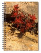 Indian Paint Brush Spiral Notebook