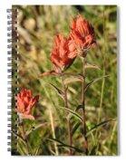 Indian Paintbrush, Colorado Spiral Notebook