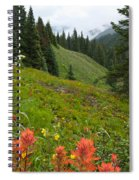 Indian Paintbrush Window Into The San Juans Spiral Notebook