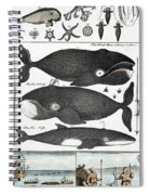 Indigenous Fish, Greenland, 18th Century Spiral Notebook