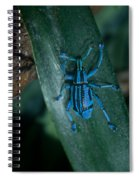 Indigo Blue Weevil Spiral Notebook