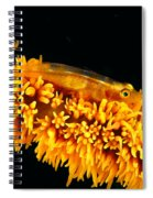 Indonesia, Goby Spiral Notebook