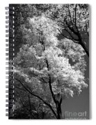 Infrared Tree Pic Spiral Notebook