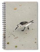 Injured Sandpiper Spiral Notebook
